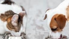 Cani e gatti possono aprire un conto corrente