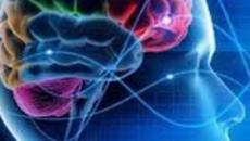 Scoperta incredibile: i neuroni si riproducono anche da anziani