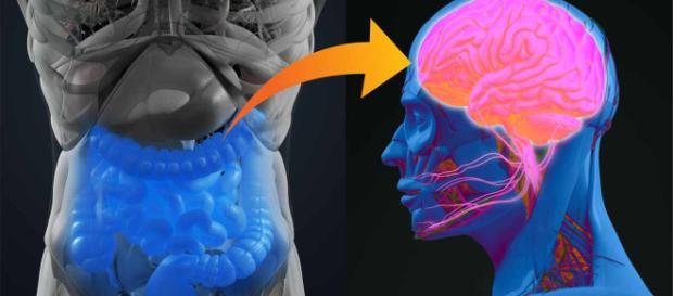 Su Intestino Puede Ayudar a Combatir La Depresión y Presión Arterial - mercola.com