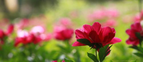 Nem tudo são flores, mas você é feito de amor!