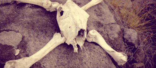 Ritrovate ossa nel Salento. Immagine di repertorio.