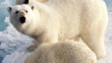 Aumenta el numero de nevadas en la Antártida