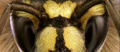 A swarm of killer bees has taken up residence in a Texas neighborhood. [image via wikimedia commons/Tim Evison]
