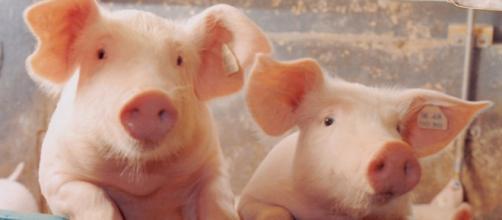 Exportações de carne e outros produtos brasileiros podem ser beneficiadas diante do embate entre EUA e China