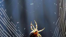 Il miracolo del ragno e la sua invenzione
