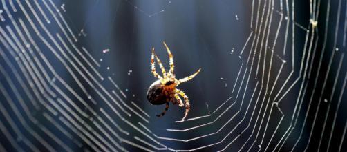 Ragnatela e ragno fotografati all'imbrunire