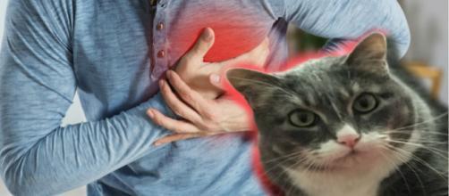 Shotzie: el gato que salvó a su dueño de una muerte inminente