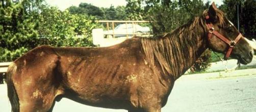 El mundo de los equinos y sus enfermedades - blogspot.com