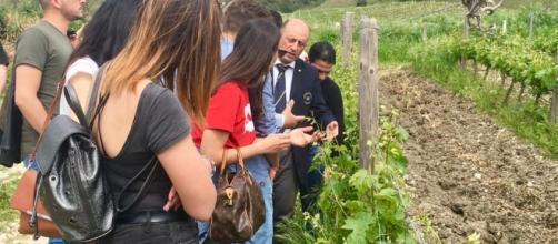 Strada del Vino Terre Sicane, Di Giovanna: puntiamo su qualità e accoglienza