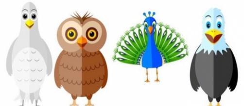 Conheça o pássaro que melhor representa a sua personalidade: