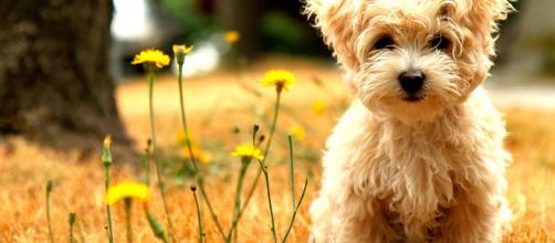 Interesantes aplicaciones móviles para los amante de las mascotas