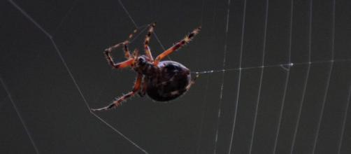 No nos comemos ocho arañas al año cuando dormimos; científicos - cuatro.com