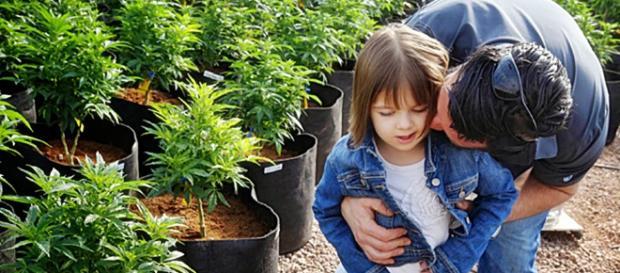 Darías marihuana a tu hijo? ~ Consciencia y Vida/ Magazine - blogspot.com