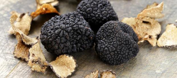 La trufa negra más grande del mundo - Cocina y Vino - cocinayvino.com