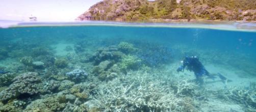 La Gran Barrera de Coral pierde su color por el calentamiento global