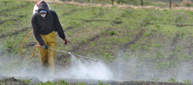 Fertilizantes químicos usos y consecuencias en la agricultura - com.mx