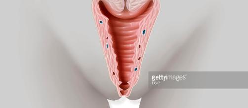 Vagina drawing Pictures | Getty Images - gettyimages.fr
