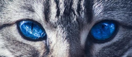 ¿Cómo crees que verá tu perro, tu gato o tu canario?