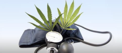 El cannabis y el accidente cerebrovascular - sensiseeds.com