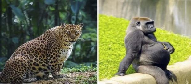 Algumas imagens de animais no período de gestação
