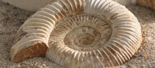Aspecto de un fósil. Public Domain.