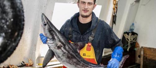 Pescatore ferito da uno squalo smeriglio morto