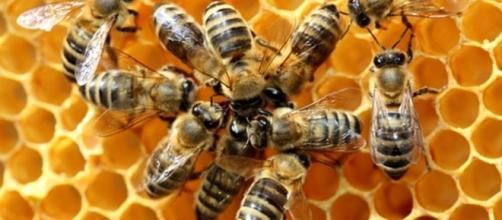 Strage di api causata dall'abuso di pesticidi: ecosistema veneto ... - trevisotoday.it