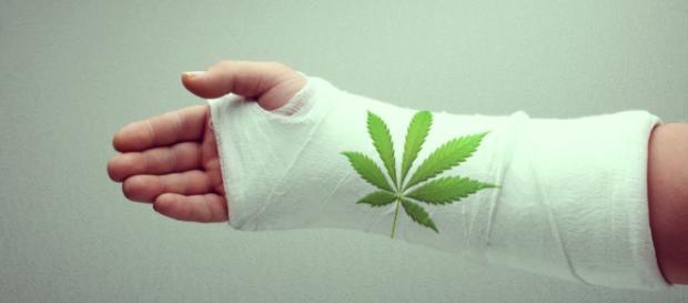 La ciencia descubre cómo la marihuana contribuye a la salud de los ... - royalqueenseeds.es