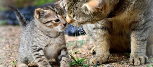 3 cosas que tal vez no sabías sobre animales