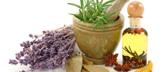 Cocina Segura: Intoxicaciones por plantas medicinales - cocinasegura.com