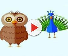Os pássaros dizem um pouco mais sobre a sua personalidade