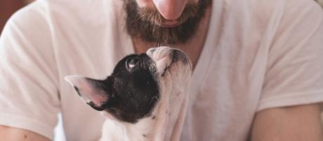 Tu perro te quiere más de lo que crees. (Foto: Pixabay)
