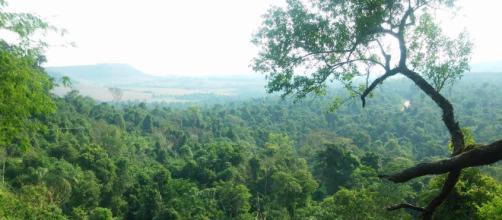 Bosque tropical es sustento de mil millones de personas en el mundo - com.ar