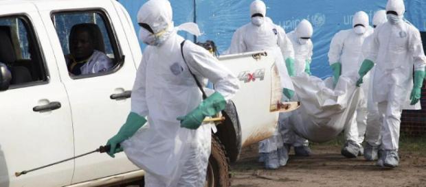 Infizierte Tiere werden verspeist: Ebola-Virus frisst sich ... - focus.de
