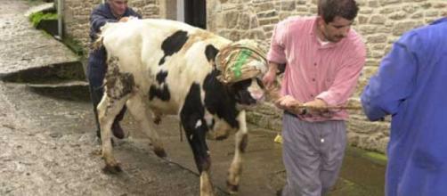 ANTENA 3 TV | Primer caso de vaca loca en Estados Unidos infectada ... - antena3.com
