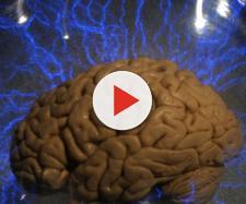 Un metodo per craccare il cervello - Wired - wired.it