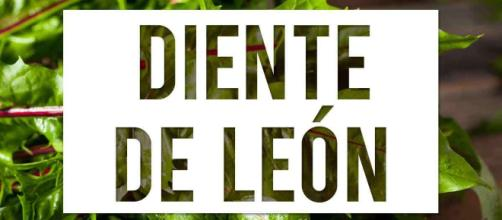 Beneficios del Diente de león (Taraxacum officinale) | Arsenal ... - arsenalterapeutico.com