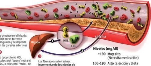 dieta para subir el colesterol bueno y bajar el malo