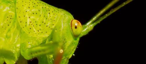 Biomimetismo 16: Antibióticos naturales - muyinteresante.es