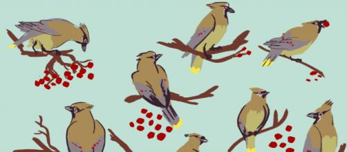 Meg loves birds and frequently features these clever creatures in her art. / Image via Meg Petrillo, used with permission.