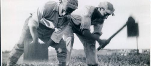 Trabalhadores cultivando campos nos anos 1930.
