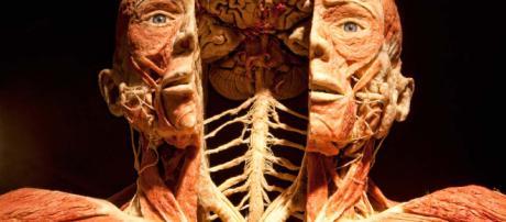 Gunther von Hagens: Body Worlds (Das Körperwelten) | Noiselab