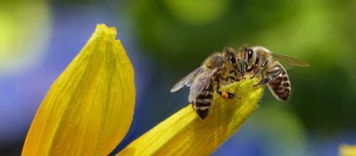 20 maggio, è il World Bee Day / BlogNews - blog-news.it