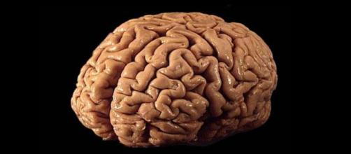 Cervello umano in un adulto sano