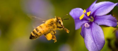 Las principales amenazas de las abejas y su día mundial - eltiempo.es
