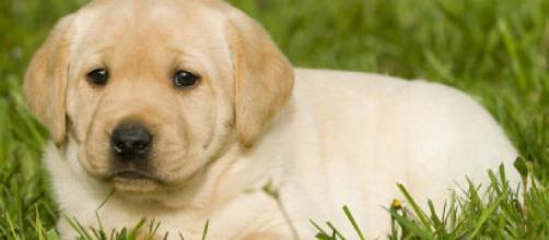 El cuarto mes del cachorro | Mascotas - facilisimo.com