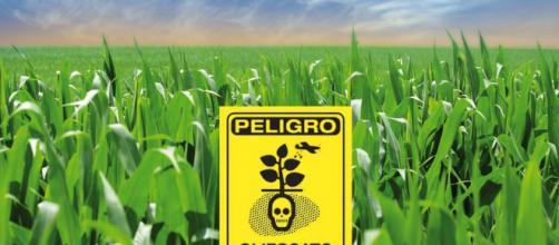 El glifosato, herbicida considerado inocuo, también es un tóxico ... - dsalud.com