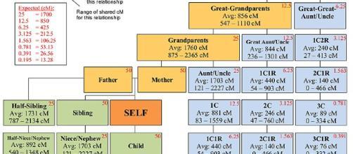 Genealogical tree based on a DNA sample (Image via Blaine T. Bettinger - WikiMedia Commons)