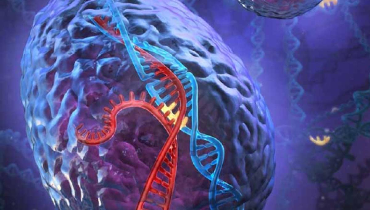 Resultado de imagen de El cerebro humano y su conectividad