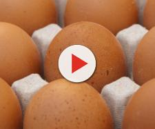 Ph. Pixabay.com - jackmac34 - Un uovo al giorno leva il medico di torno ?